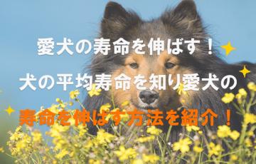 犬の平均寿命、寿命を延ばす方法