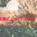 犬種、猫種によってドッグフードを選ぶ
