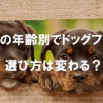 愛犬の年齢別でドッグフードの選び方は変わる?