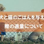 犬と猫のごはんを与える際の適量について