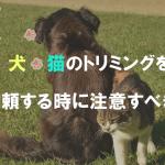 犬・猫のトリミングを依頼する時に注意すべき点