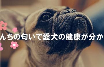 うんちの匂いで愛犬の健康が分かる