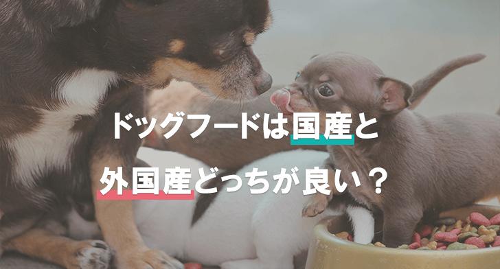 ドッグフードは国産と外国産どっちが良い?