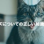 猫エイズについての正しい知識を持とう