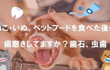 ペットフードを食べた後の歯磨きしてますか?