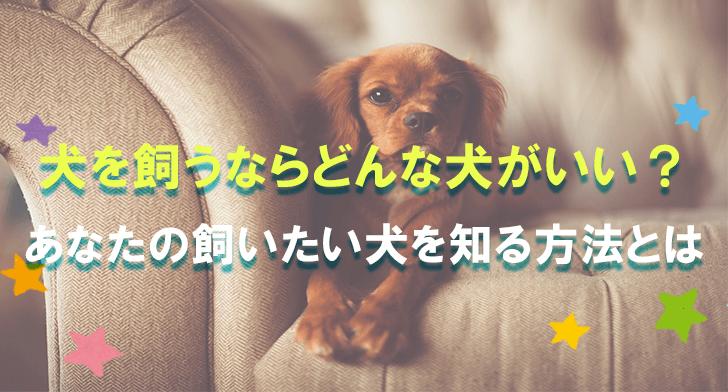 犬を飼うならどんな犬がいい?あなたの飼いたい犬を知る方法とは (1)