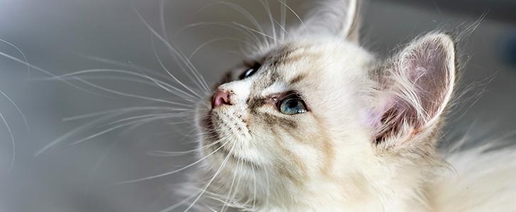 猫種ごとのキャットフード選び
