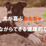 犬が喜ぶおもちゃ、楽しみながらできる健康的な遊び方