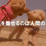 犬に服を着せるのは人間のエゴ?