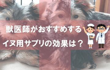 獣医師がおすすめするイヌ用サプリの効果は?