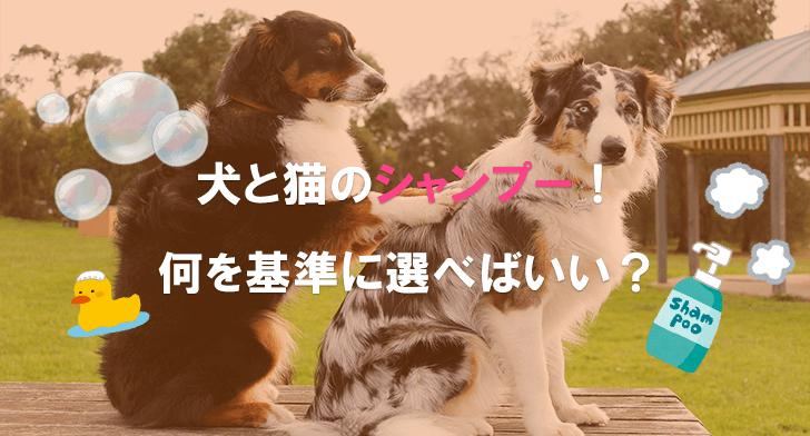 犬と猫のシャンプー!何を基準に選べばいい?