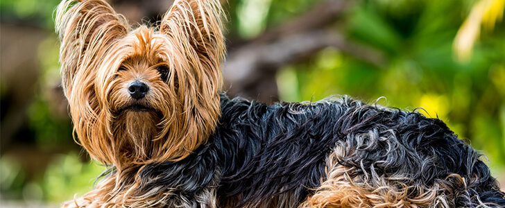 体毛に覆われる犬