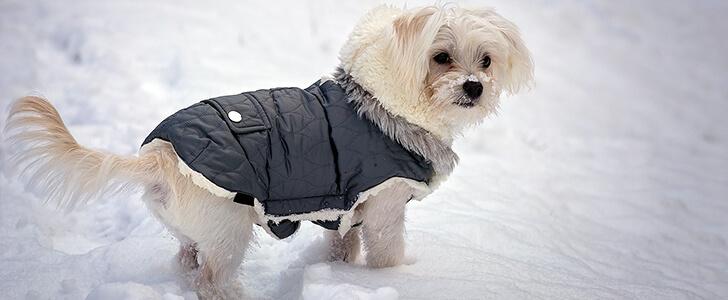 寒がっている犬
