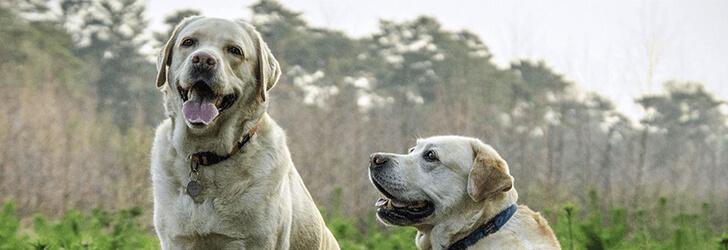 犬は縦社会