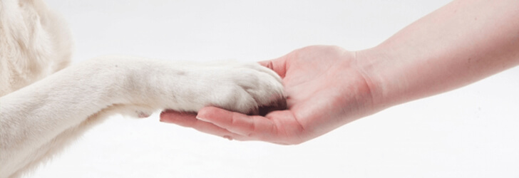 犬に好かれるための方法