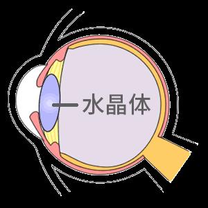 眼の水晶体の図解