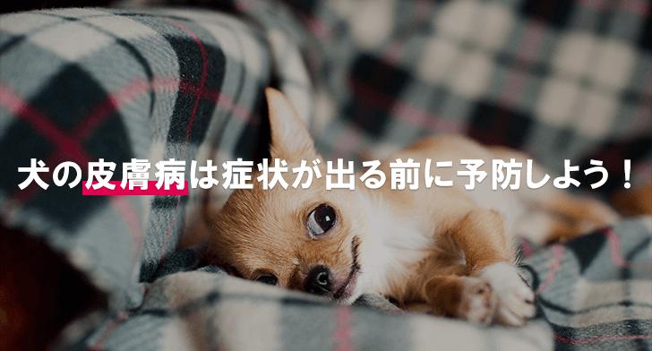 犬の皮膚病は症状が出る前に予防しよう!