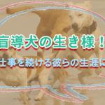 盲導犬の生き様!誇れる仕事を続ける彼らの生涯について