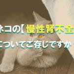 ネコの【慢性腎不全】についてご存じですか?