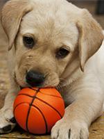 ボールをかじる犬