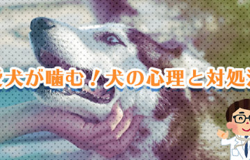 愛犬が噛む!犬の心理と対処法