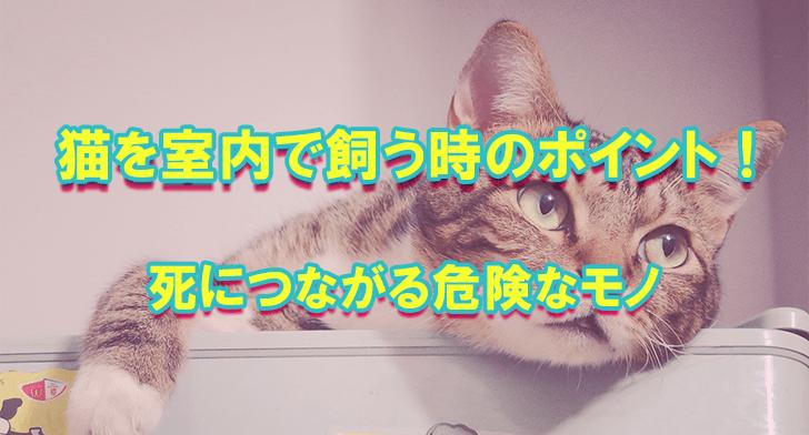 猫を室内で飼う時のポイント!死につながる危険なモノ