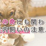 【愛犬が死ぬことも】知っておきたい室内で犬を飼う時の注意点!