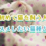 初めて猫を飼う人にオススメしたい猫種とは?