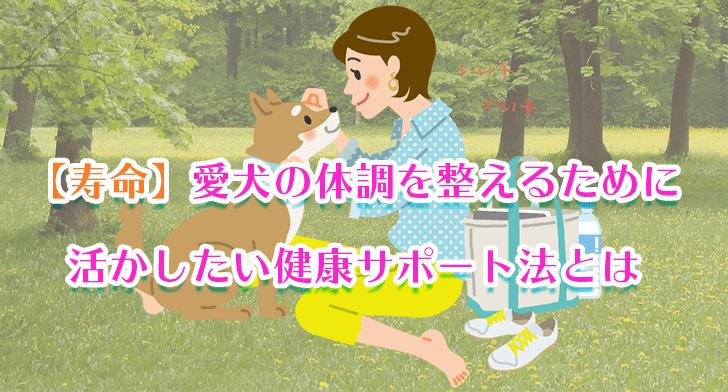【寿命】愛犬の体調を整えるために活かしたい健康サポート法とは