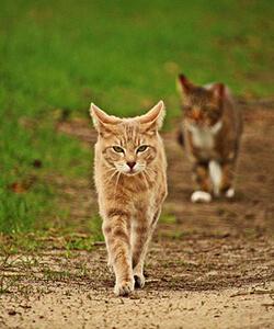 野生の猫のイメージ
