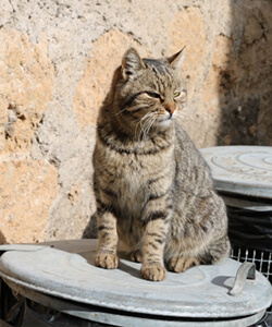 ゴミ箱の上に立つ猫