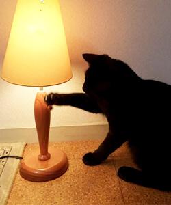 電化製品を触る猫