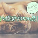 猫の癌を誘発する5つの危険とは?