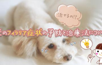 犬のフィラリア症状の予防と治療法について
