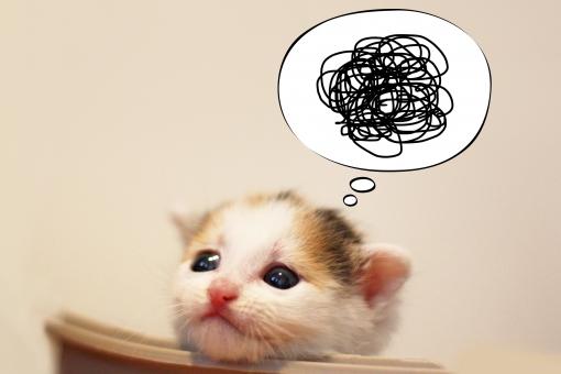ぐるぐる猫