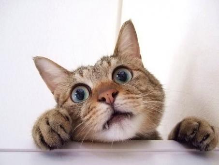 ショックな猫