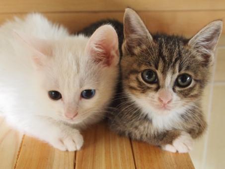 コチラを見る2匹の猫の画像