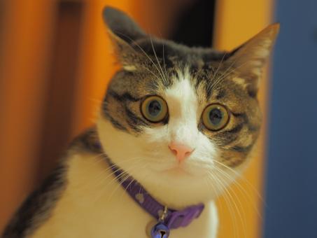 くしゃみをする猫の画像