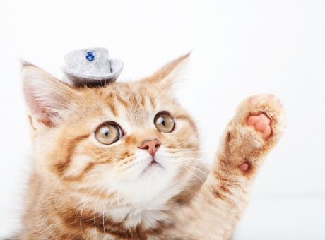 猫 気まぐれ
