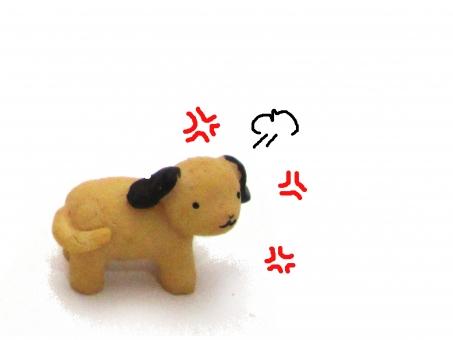 犬 怒った
