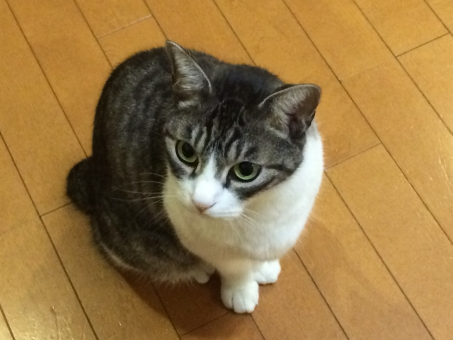 座っている猫の画像2