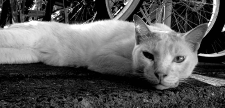 体調が悪そうな猫