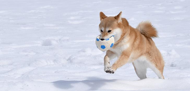 犬が雪の中で遊んでいる画像