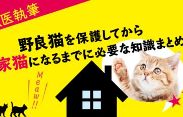 野良猫を保護するアイキャッチ画像