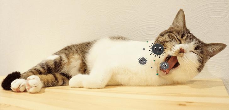 ウイルスに感染しそうな猫の画像